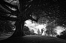 wedding photo of bride and groom under a huge tree in rathmullan co donegal