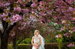 donegal and sligo wedding photographers bride with a cherry blossom tree