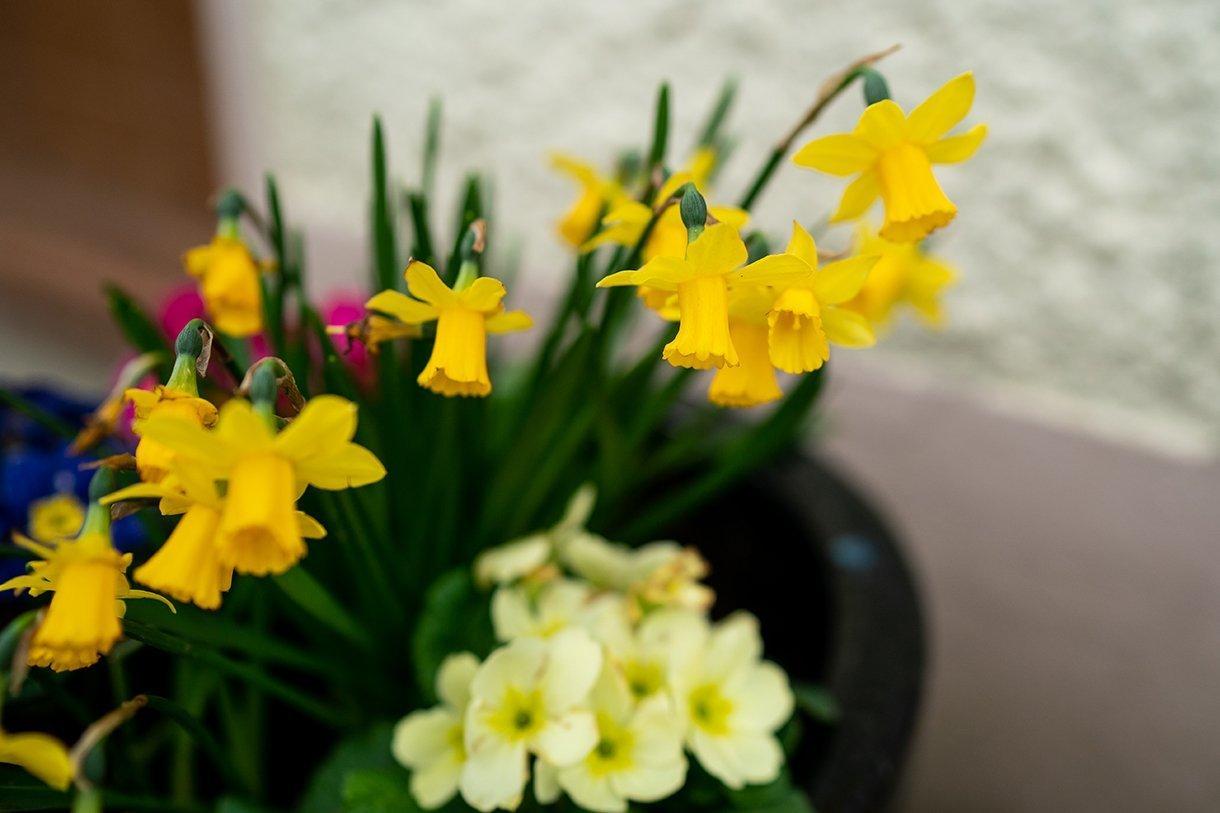 Allingham Hotel Bundoran Wedding daffodils